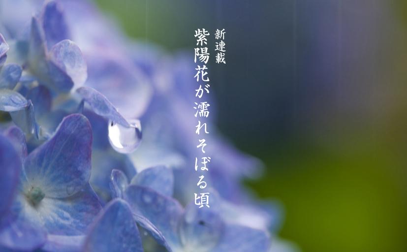 紫陽花が濡れそぼる頃 1(オヤジの小説・全33話)